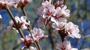 Gyümölcsfa ültetés gyakorlat nélkül