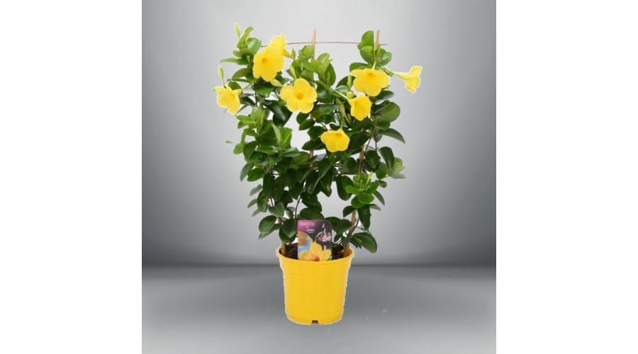A különleges virágok ültetésének titka